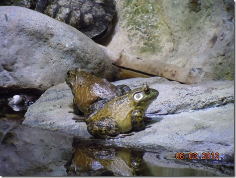 Jerimia was a bull frog!