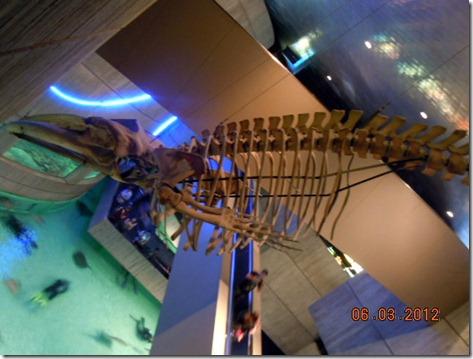 Whale Skelton