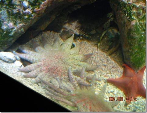Starfish holding hands!