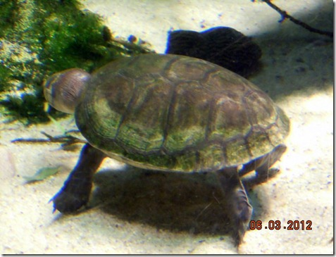 Turtle on tippy toes!