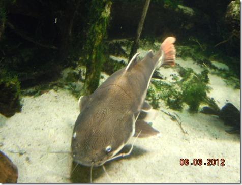 Large Catfish!