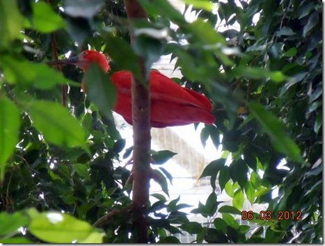 A Red Amazon Bird