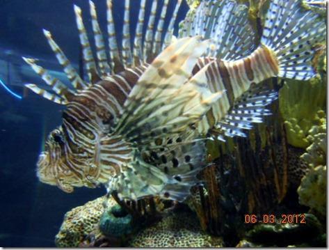 A Lion fish!