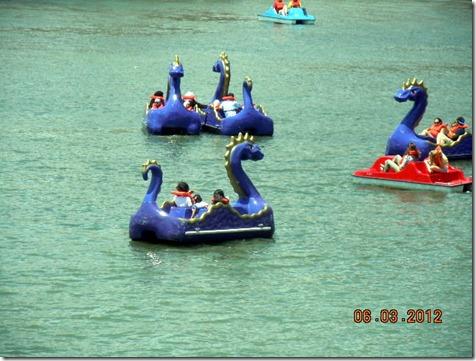 Dragin paddleboats in the harbor!