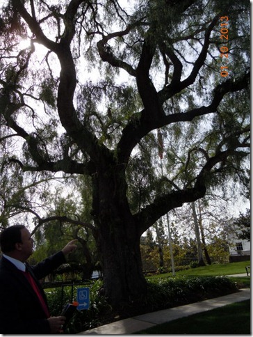 California native tree planted by family