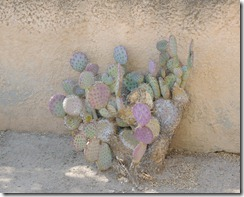 Prickly Pear colors