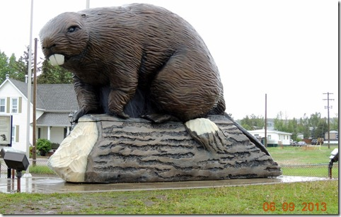Beaver in Beaverlodge AB