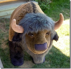 Stuffed buffalo @ Yukon Motel gift shop