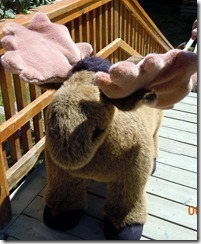Stuffed moose @ Yukon Motel gift shop