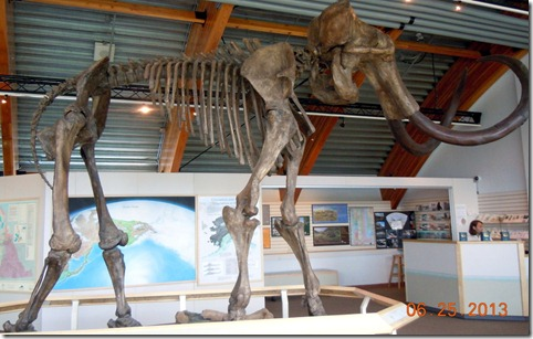 Beringia Interpretive Centre- White Horse YT- Woolley Mamouth
