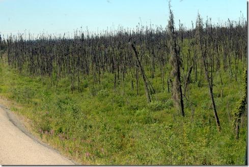 Burnt land between Chicken and Tok AK