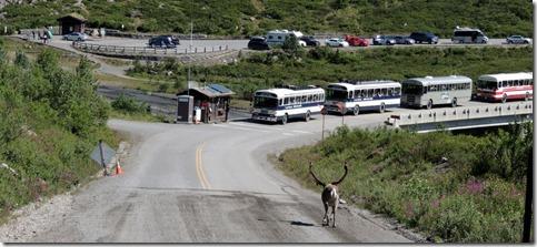 Crazy Caribou Denali Park Tour