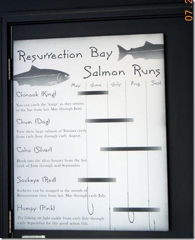 Salmon Runs