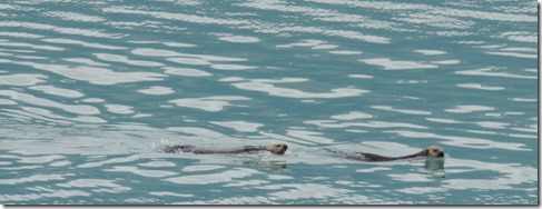 Two sea otters in front of the  motor home