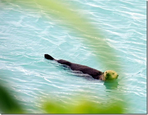 Sea Otter right in front of motor home