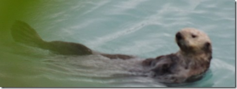 Sea Otter in front of the motor home