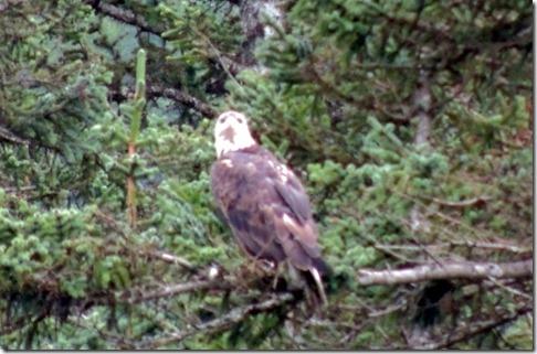 Eagle- Valdez