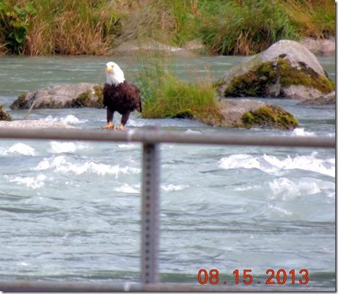 EAgle on the bridge