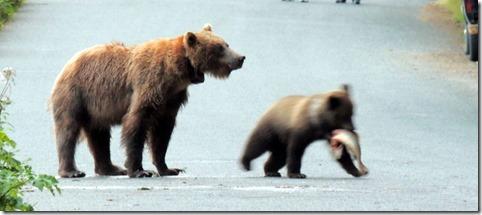 Cub stealing salmon