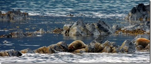 Harbor seals at lighthouse