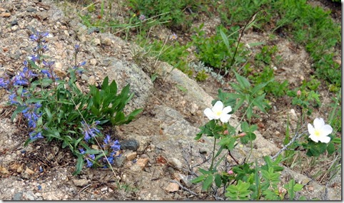 Wildflowers View  atJuniper Pass in Arapahoe National Forest
