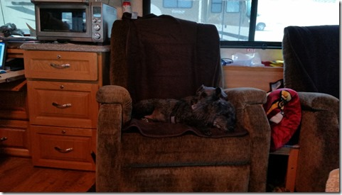 Dogs relaxing on Bob's chair