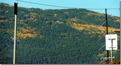 From Hwy. 285. Yellow Aspens