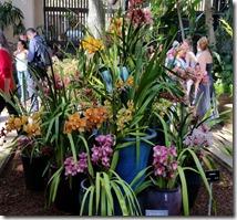 Iris's in Botanical Garden, Balboa Park
