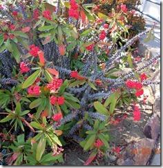 Cactus Garden,  Balboa Park