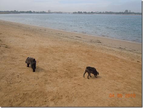 Fiesta Island dog park