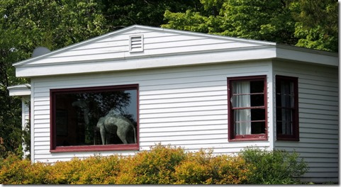 Camel in window of house on Washington Island, wI