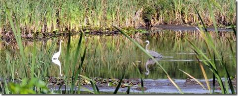 Pond in back of Walker Point, ME