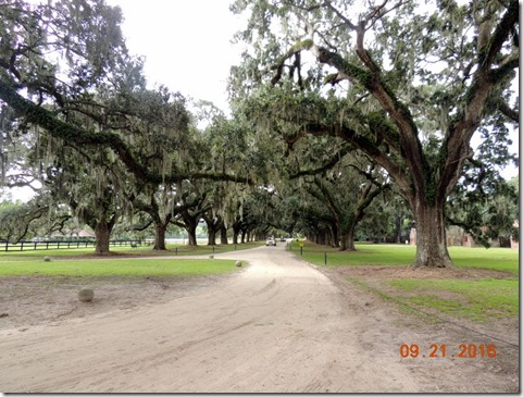 Boone Hall Plantation and Gardens