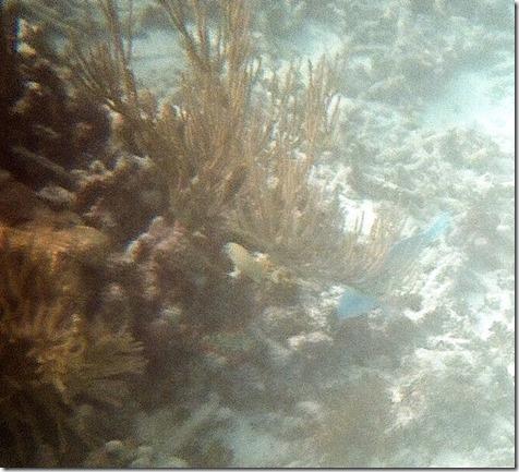 John Pennycamp Snorkle Trip