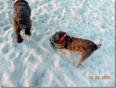 Dog Beach, Venice FL