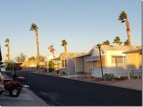 Flag palms
