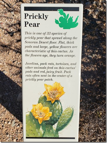 Prickly pear sign