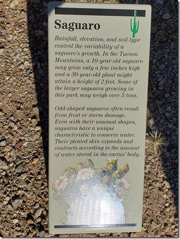 Saguaro sign